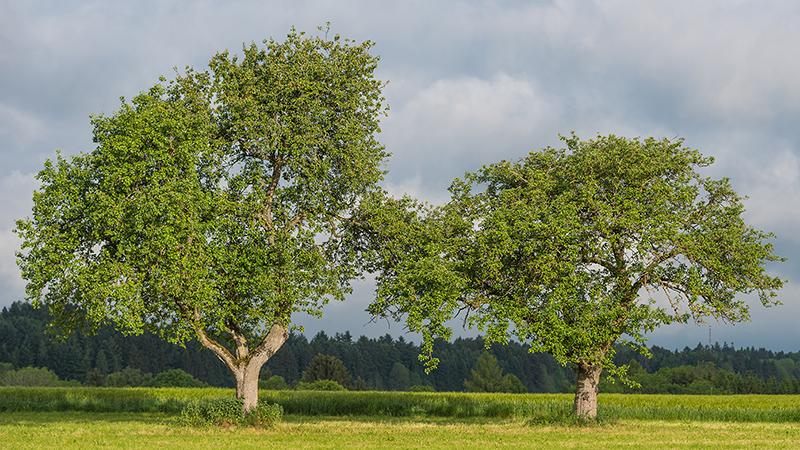 Wald/Bäume